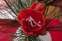 Bouquet, Avent, Amaryllis