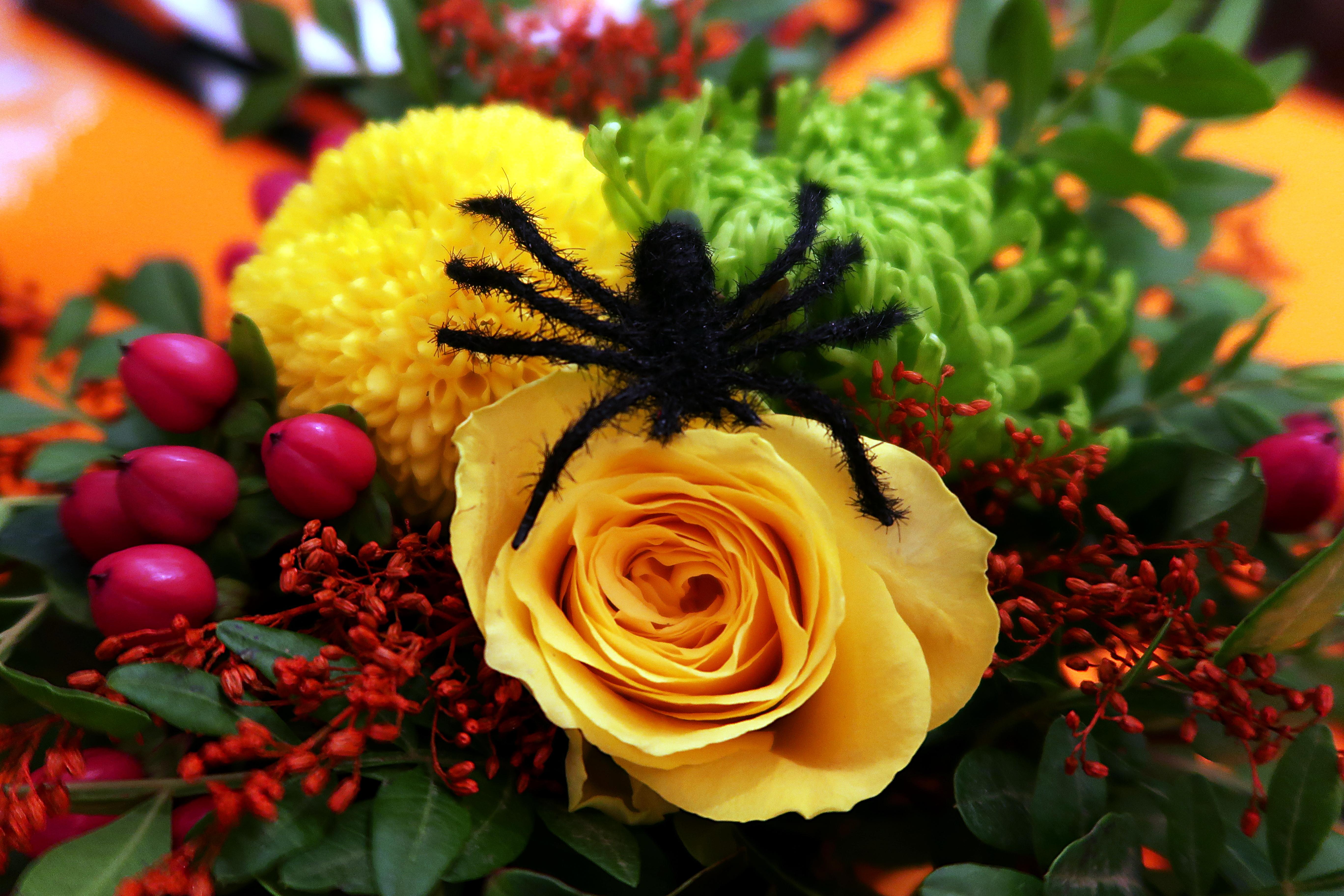 Halloween-18-Araignée-Centre_