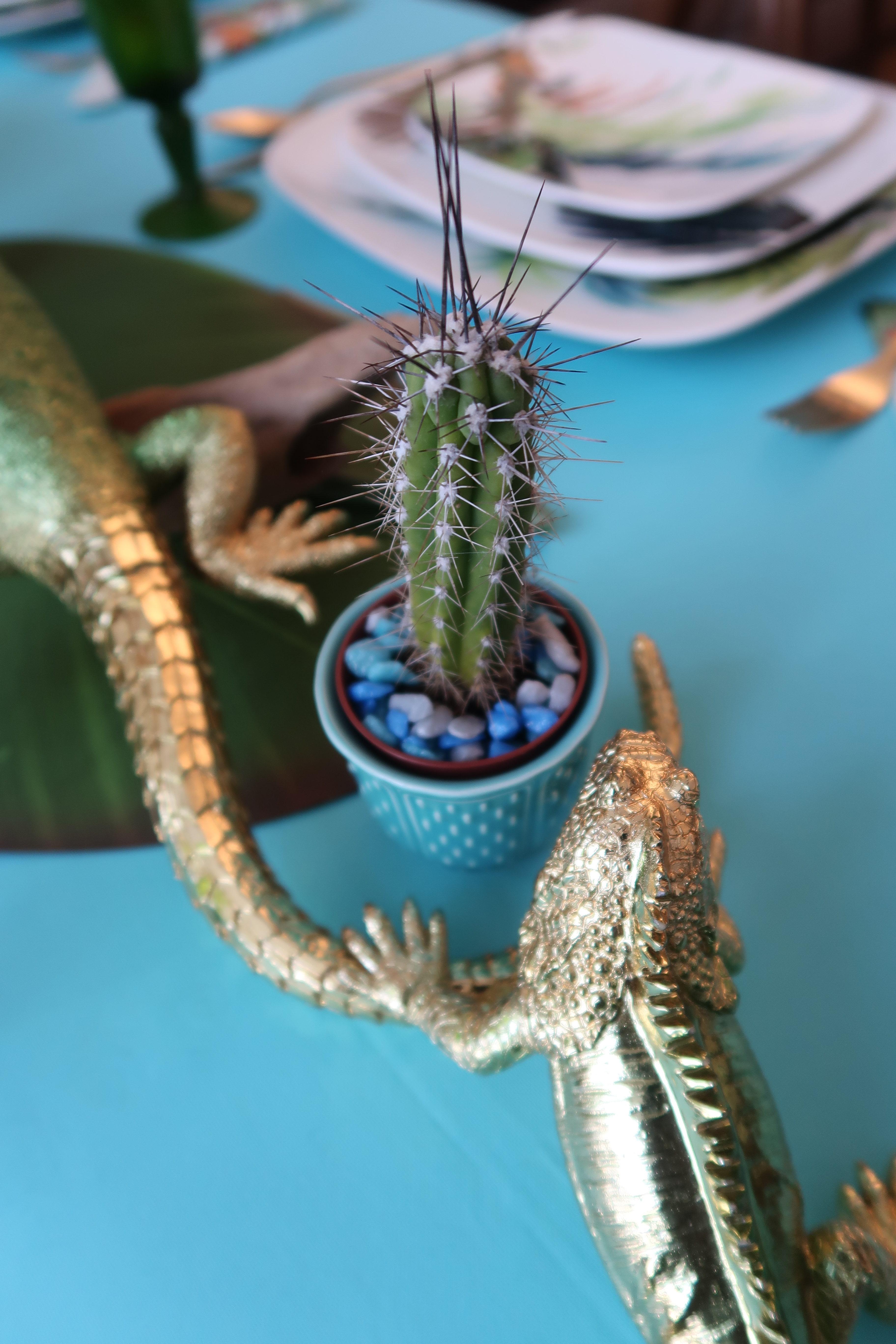Les-îles-Voyage-1-Cactus-e1526237158622
