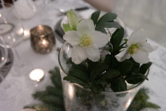Montagne - Rose de Noël