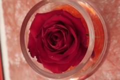 Saint-Valentin-Rose