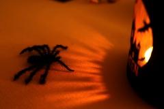 Halloween-18-Araignée-Lanterne_