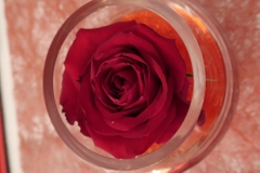 Saint-Valentin-Rose